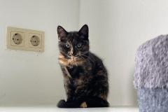 Katzenküche