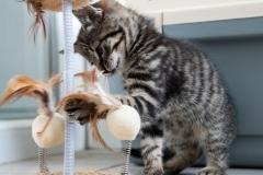 Kitten-2020-06-21-2