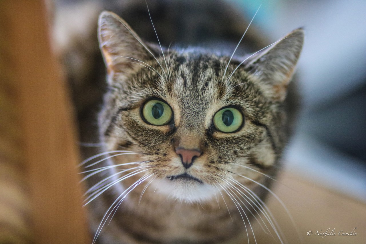 Katzendame Stella hat ein neues Zuhause gefunden