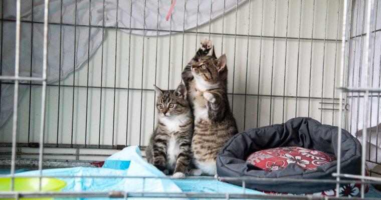 Kurzer Besuch im Katzenhaus