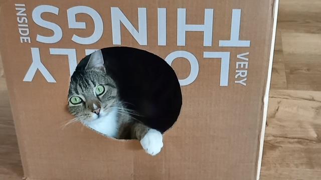 Roxi in ihrem neuen Zuhause